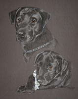 portrait of black lab Max as a dog and a pupp