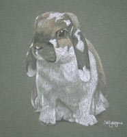 lop eared rabbit - portrait of Ben