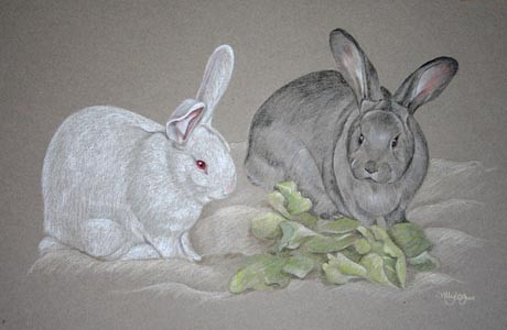 portrait of 2 rabbits