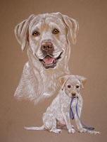 yellow lab - Sam as a dog and a puppy