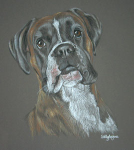 Dog Portraits by Sally Logue UK and her Customers Comments