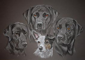 portrait of three labradors and a jack russel terrier
