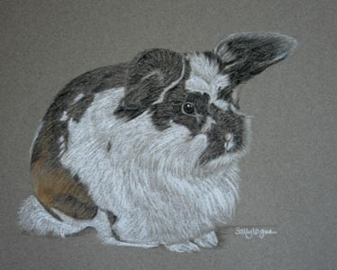 black and white rabbit portrait