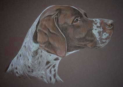 portrait of liver and white pointer