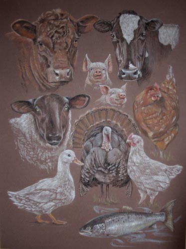 Freedom Food Farm Animal Portrait, cattle, sheep, cows, laying chicken, hen, piglets, turkey, duck and salmon