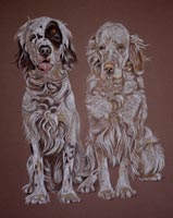 english setter portrait - Ellie and Sariah