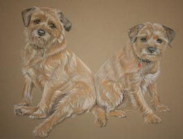 full body pastel portrait of two border terriers
