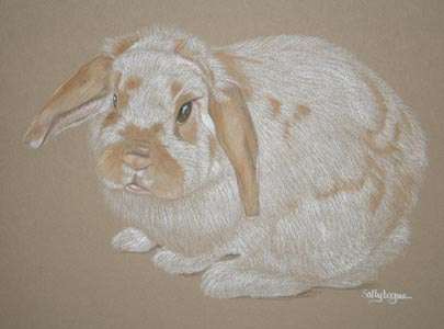 white and tan rabbit portrait - Fudge