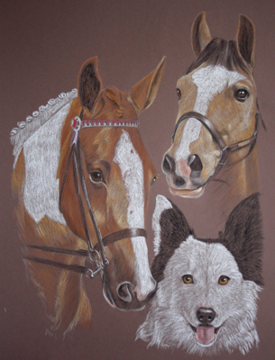 portrait of coloured horse, dun pony and border collie