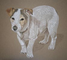 pastel portrait of jack russel in standing  pose - Storeman