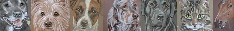 Pet Portraits by Sally Logue - dogs cats and horses