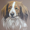 dutch kooiker dog portrait