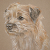 border terrier portrait