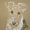 wire fox terrier portrait