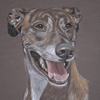 brindle lurcher portrait