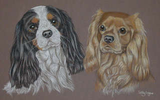 tri-colour and ruby cavalier king charles spaniels