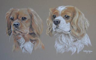 ruby and ruby & white cavalier king charles spaniels