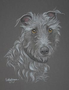 Lurcher Pictures Paintings And Portraits Plus Dog Breed