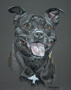 Staffordshire Bull Terrier Pictures Paintings And