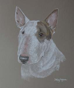 Bull Terrier Pictures Paintings And Portraits Plus Dog