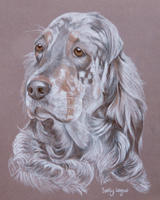 english setters portraits - Lucy