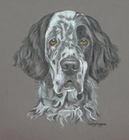 english setters portraits - Yentl