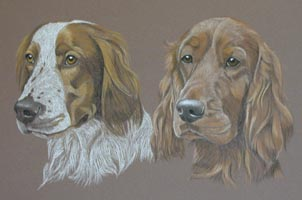 english setter portraits - Dylan and Hendrix