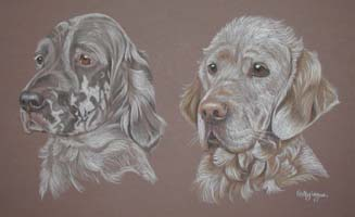 english setter portraits - Popy and Ruby