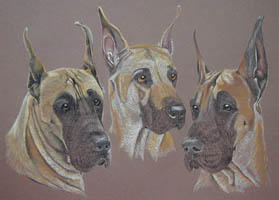 Great Danes - Sierrs Duncan and Rocket