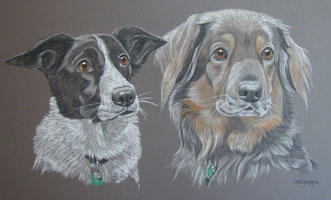double dog portrait - Border Collies - Galli and Bo