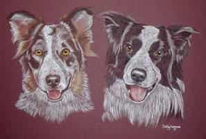 double dog portraits - iBorder Collies - Meg and Jay