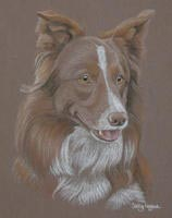 red collie