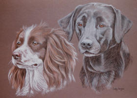 double dog portraits - Springer Spaniel and Lab