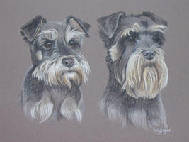 double dog portraits - Miniature Schnauzer