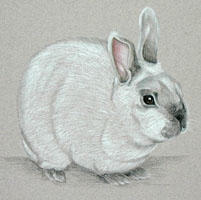 Dwarf Netherlands Rabbit portrait in Pastel - Misty
