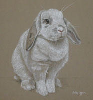 Rabbit portrait - Rosie