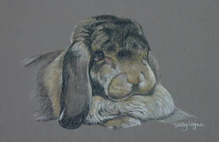 Lop eared rabbit portrait - Worf