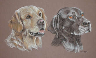 double dog portrait - Retriever and Labrador