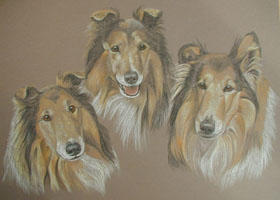 Rough Collies - Kelly, Ondie and Seb