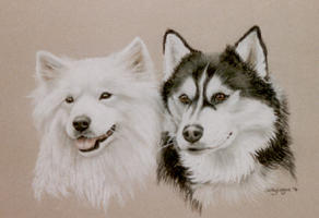 double dog portraits - Samoid and Husky