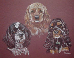Spaniels - Zak, Dylan and Rudy