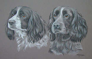 double dog portraits - springer and cocker spaniel