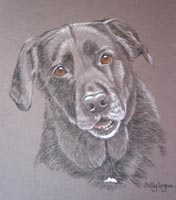 black Labrador - portrait of Jody