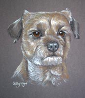 border terrier - Mac