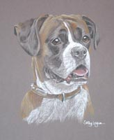 boxer dog - portrait of Lara