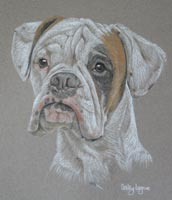 boxer dog portrait - Bobby