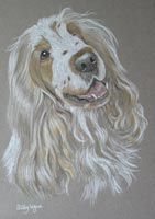 cocker spaniel portrait - gillie