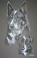 border collie dog and pup - Meg and Mitch