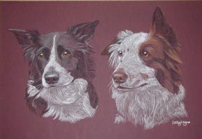 double dog portrait - Border Collies - Meg and Rosie