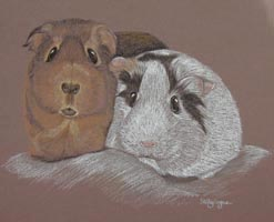Guinea pig portrait - Yin and Yang